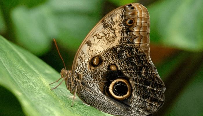 Por qué las mariposas son de colores