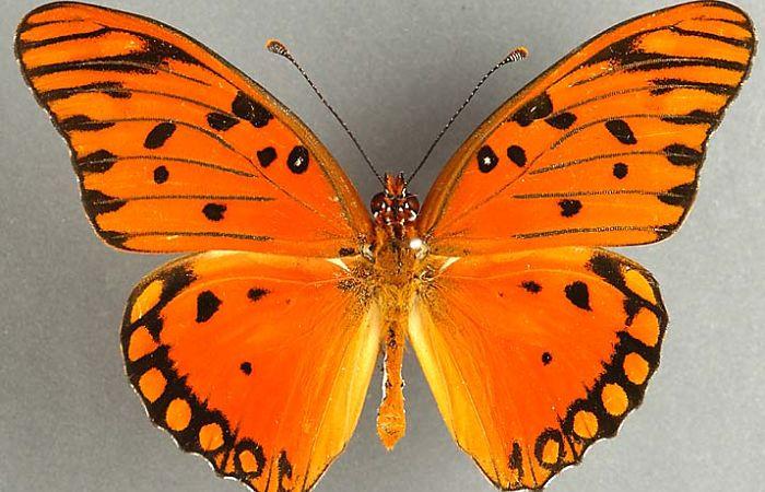 Mariposa diurnas