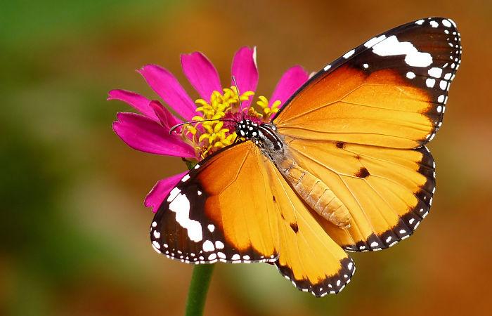 Cuanto tiempo viven las mariposas