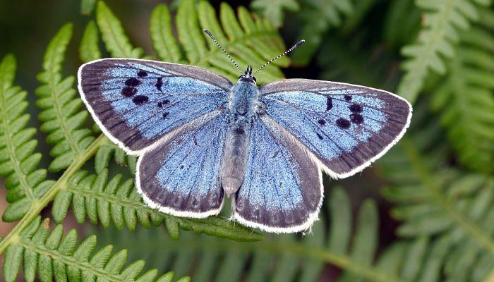 Mariposa carnívora