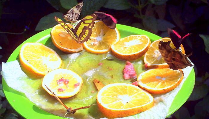 Cómo atraer mariposas a tu jardín