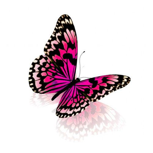 Todo sobre las mariposas